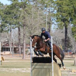 Photo courtesy of Christine Rhodes/Stable View.