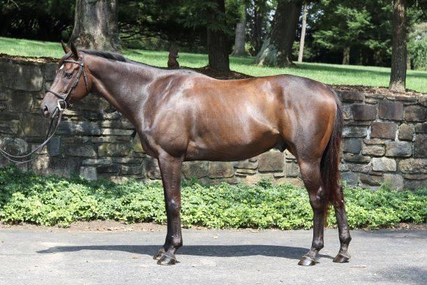 Weekly OTTB Wishlist from Cosequin: Meet MidAtlantic Horse Rescue