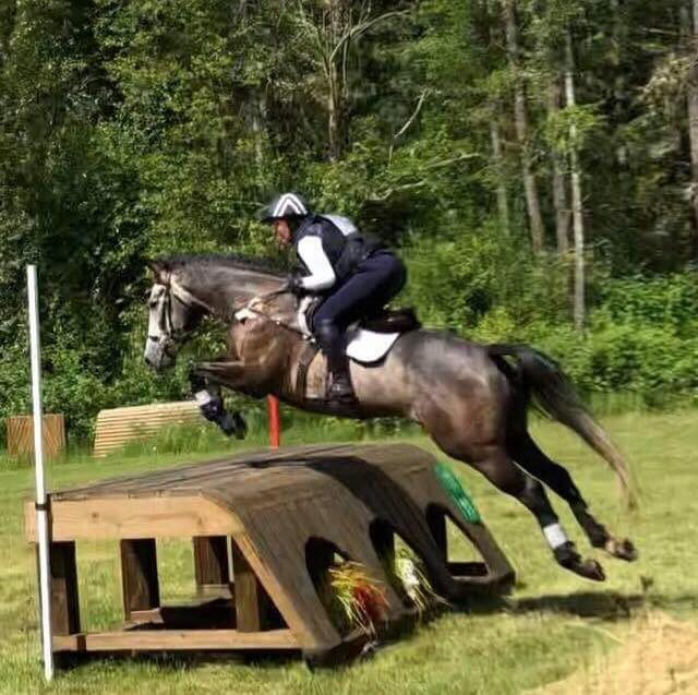 Image result for photo of Water cube horse