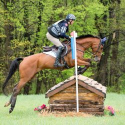 Boyd Martin and On Cue. Photo by Amy Flemming-Waters / AFW Photography.