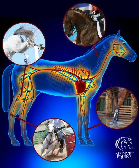 This Week in Horse Health News Presented by MediVet Equine