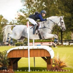 Ideal Contini. Photo via Sport Horse Nation.