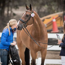 Smooch! These equine athletes with their part-time modeling careers owe it all to their hardworking grooms. Photo by Shannon Brinkman.