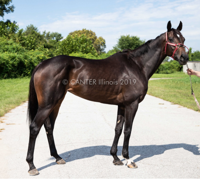 Weekly OTTB Wishlist from Cosequin: Don't Change That Name