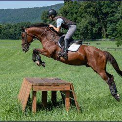 RC Razzle. Photo via Sport Horse Nation.