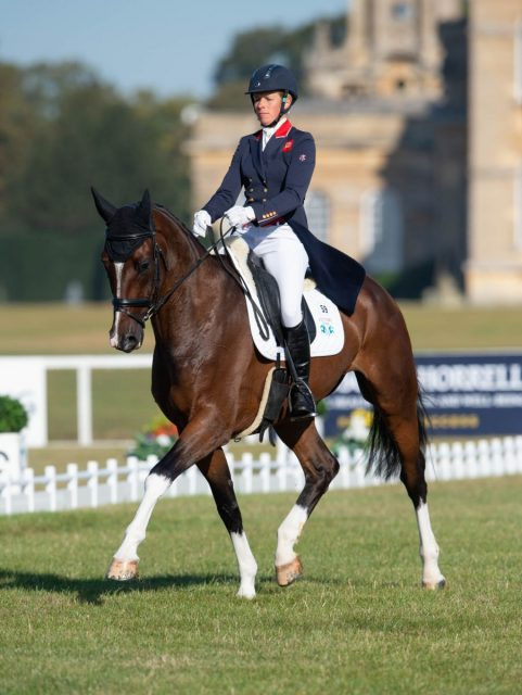 Friday at Blenheim: Taylor Back on Top as Buck Hits the Top Ten