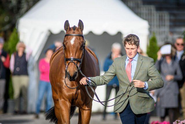 ROYAL PROFESSIONAL CHOICE EASY FIT SPLIT BOOT FRONT REAR HORSE LEG PAIR U-OYAL