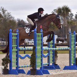 Photo via Sport Horse nation.