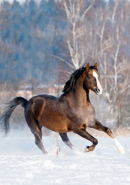 Winter Horse Health Tips from Banixx - Eventing Nation - Three-Day Eventing News, Results, Videos, and Commentary