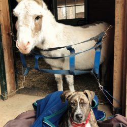 Just some buddies together on a chilly barn day. Photo by Kate Samuels.