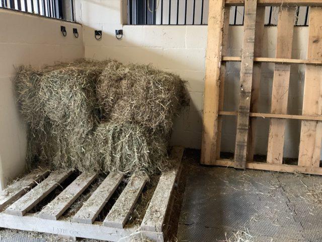 Banixx,Wound Care,Horse,Equine,Safe,Non-toxic,Hay,Shortage