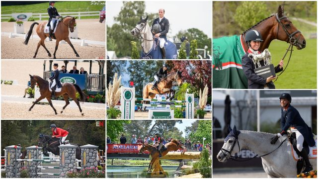 "SALE Windsor Equestrian Padded Leather Horse Pony Girth LAST 2 BRN 44/"" /& 48/"""