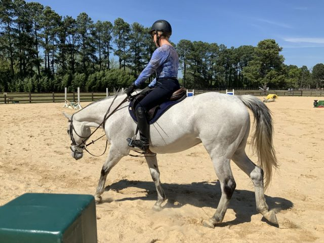 stretch,Banixx,training,dressage,Michael Plumb,horse,horse care