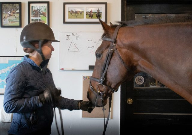 Banixx,horsemanship,training,scratches,wound
