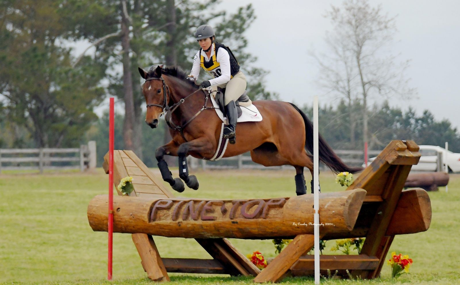 Sport Horse Nation Spotlight: 4 Bold Bays - Eventing Nation - Three-Day Eventing News, Results, Videos, and Commentary