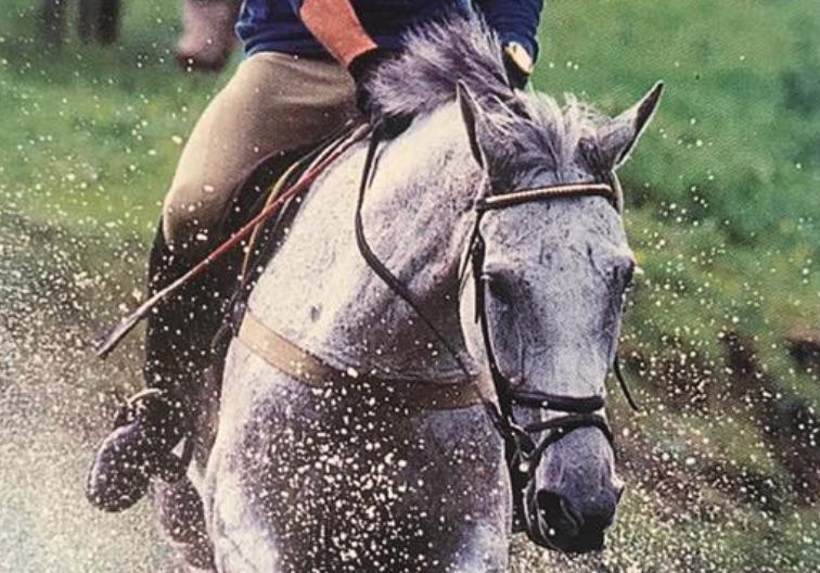Tome 5 com Phillip, apresentado pela Equilume: os nomes equinos da fazenda True Prospect | Nação de Eventos 7
