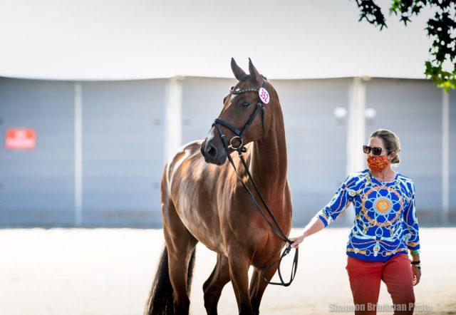 Treze pelo Great Meadow CCI3 * -L Primeira inspeção de cavalos | Nação de eventos culturais 1