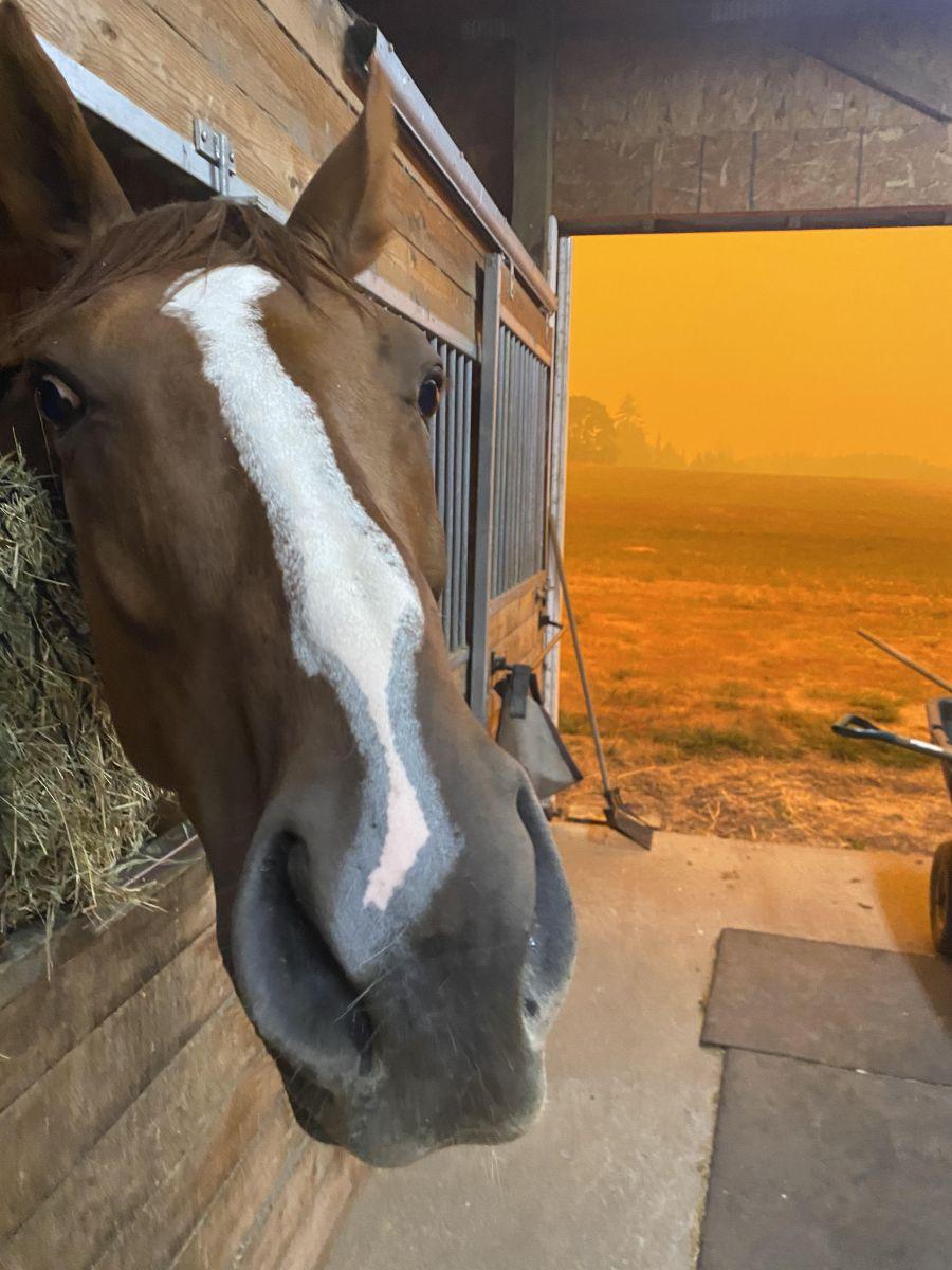 Wildfires Devastate California, Oregon, Washington: como você pode ajudar [Updated 9/17] |  Nação de eventos culturais 1