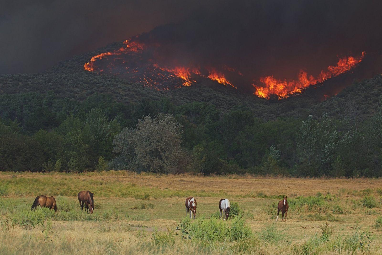 Wildfires Devastate California, Oregon, Washington: como você pode ajudar [Updated 9/17] | Nação de eventos culturais 7