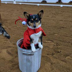 Dog Halloween at Virginia Horse Trials! Photo via VHT FB.