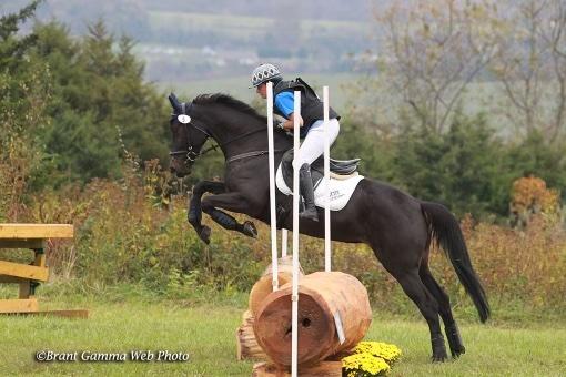Talento local: Por meio de parceria, mais crescimento é possível para a criação de cavalos esportivos americanos | Nação de eventos culturais 1