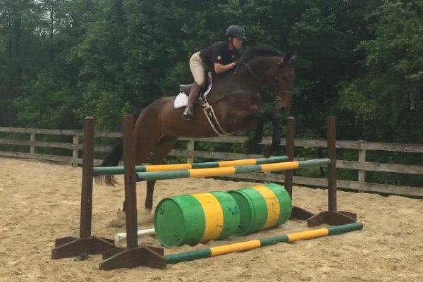Bay Irish Sport Horse