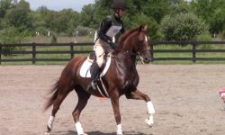 Cosmo HCFST canter 1.jpg