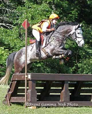 009-wits-end-eventing-horse-eventer-sales-stallion-breeder.jpg