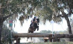 Rocking Horse Trakehner&Oaks Feb17.jpg