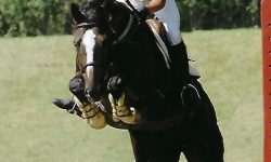 horse picture one.jpg