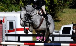 Rain Dancer Show Jumping Picture 2.jpg