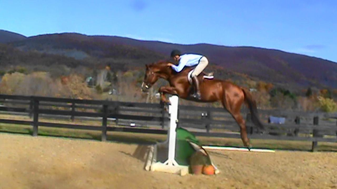 Friend or Foe jumping.JPG
