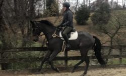 Specific-Gravity-Canter.jpg