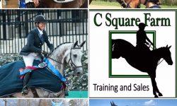 Sport Horse Nation