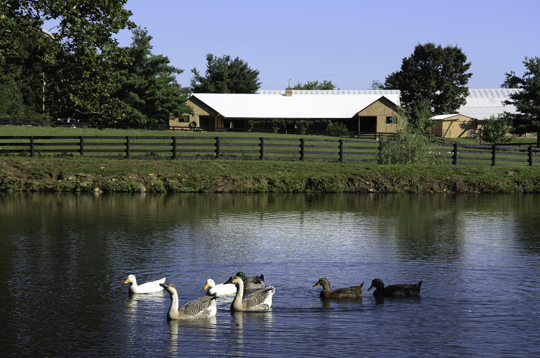 Ducks_120909 _1500.jpg