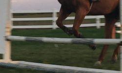 Thumper Jump Front.JPG
