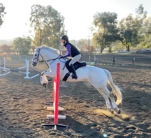 _Ollie jump schooling Temecula.jpg