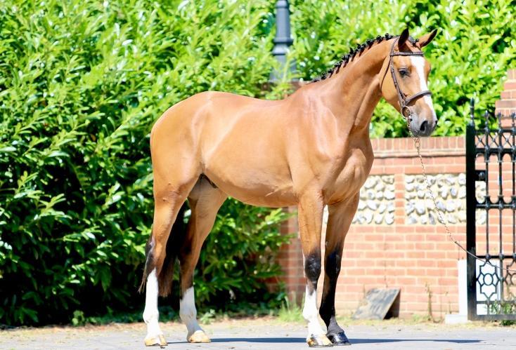 507_horse_1.jpeg