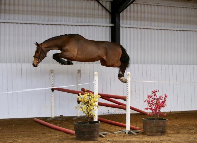 507_horse_6.jpeg